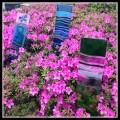 glass garden decoration